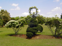 Medium fryar topiary south carolina original