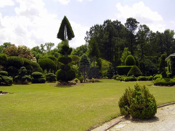 Pearl Fryar's Topiary Garden, April 2008