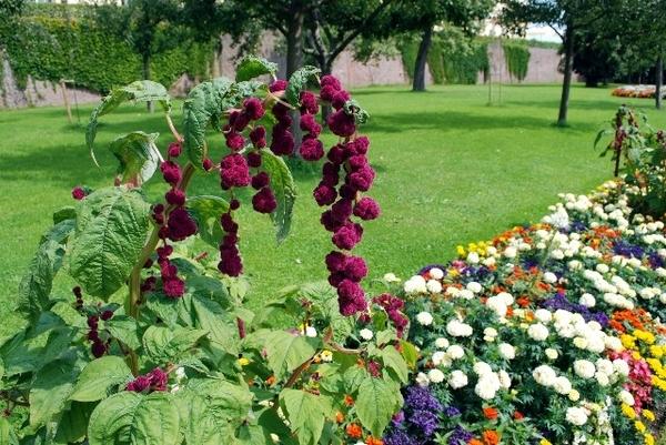 Schloss Dachau Garden