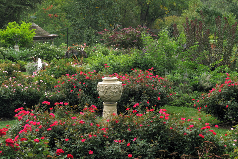 Rose Garden at Morris Arboretum in September