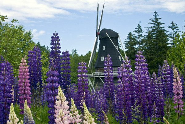 Windmill, Kingsbrae Garden