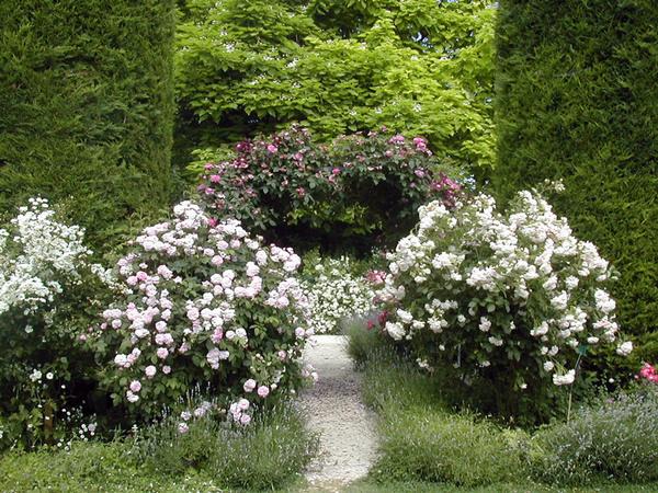 Ettenbuhl Garden, June