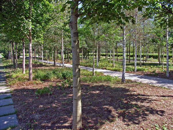 Trees, Riemer Park