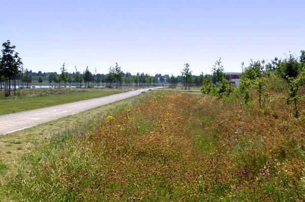 Riemer Park