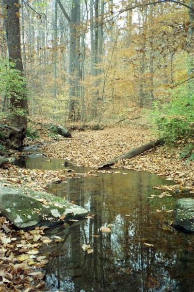 Stream, Tyler Arboreum
