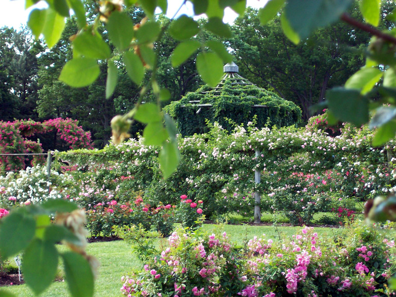 Elizabeth Park Rose Garden, West Hartford