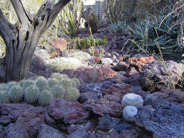 Cacti, Moorten Botanical Garden