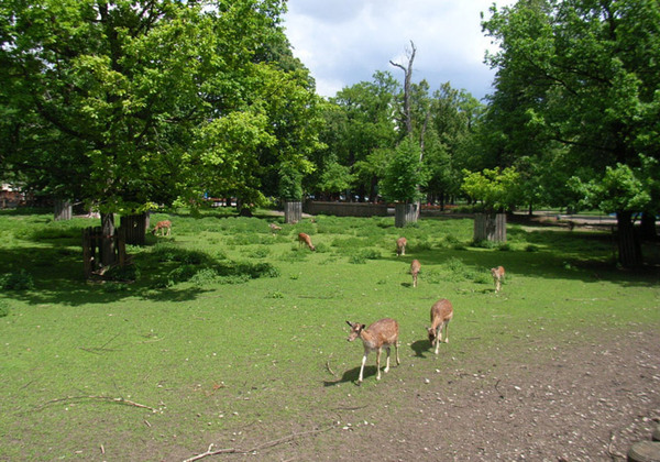 Deer, Hirschgarten