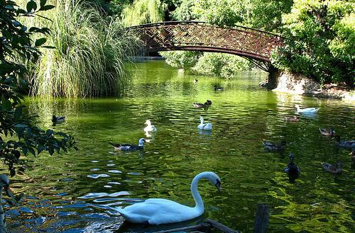 Lake, Villa Durazzo Pallavicini