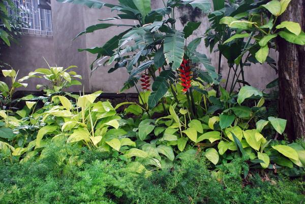 Guayaquil Botanical Gardens, Ecuador