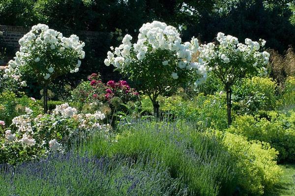 Spencers Garden, Essex
