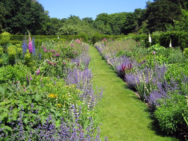 Herbaceous Border, Mottistone Manor Garden