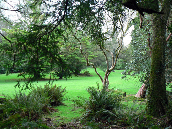Kilmacurragh Garden, Ireland