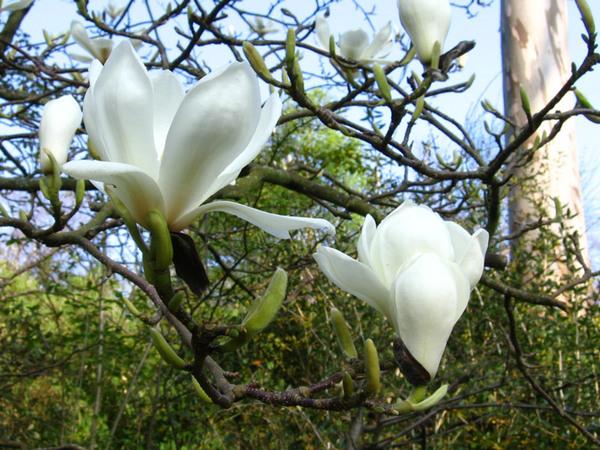 Linn Botanic Gardens, Dunbartonshire