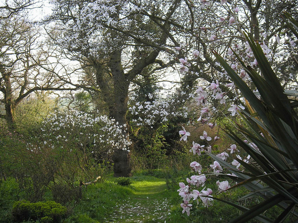 Magnolias, Blakenham Woodland Garden