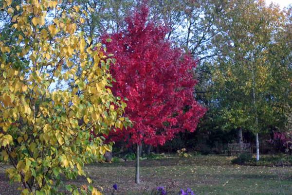 Autumn, Cranesbill Nursery Garden
