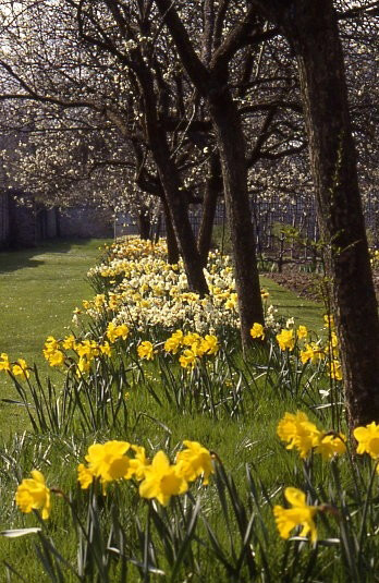 Narcisses, Chateau Saint Jean de Beauregard