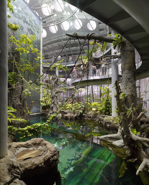Tropical Rainforest, California Academy of Sciences