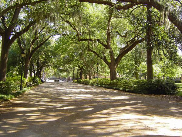 Forsyte Park, Savannah