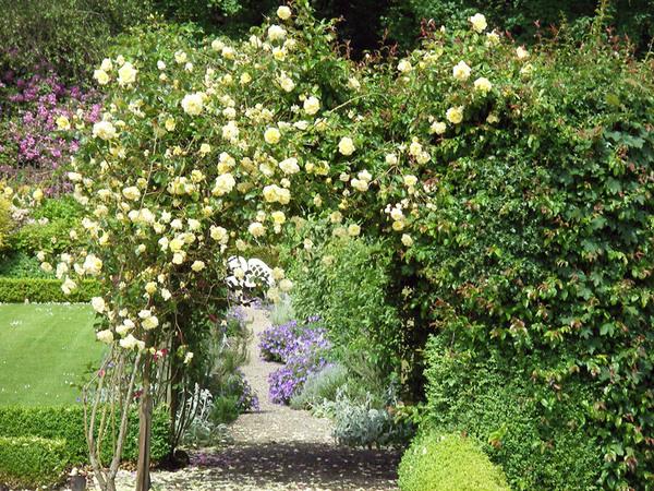 Roses, Benvarden Garden