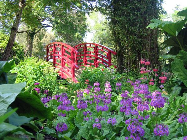 Bog Garden, Forde Abbey Garden