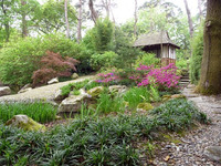 Medium pine lodge japanese garden original