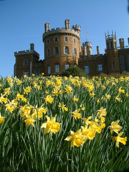 Daffodils, Belvoir Castle Gardens