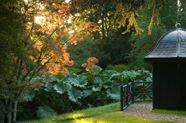 Gunnera, Cottesbrooke Hall Gardens
