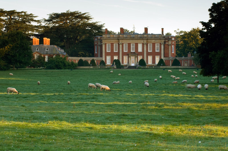 Sheep in front of Cottesbrooke Hall