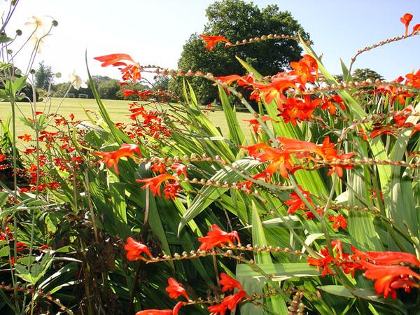 Lucifer, Finlaystone Garden