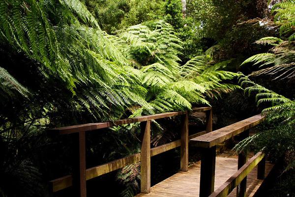 Ferns, Australian National Botanic Gardens