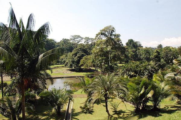 Kebun Raya Botanical Garden Bogor