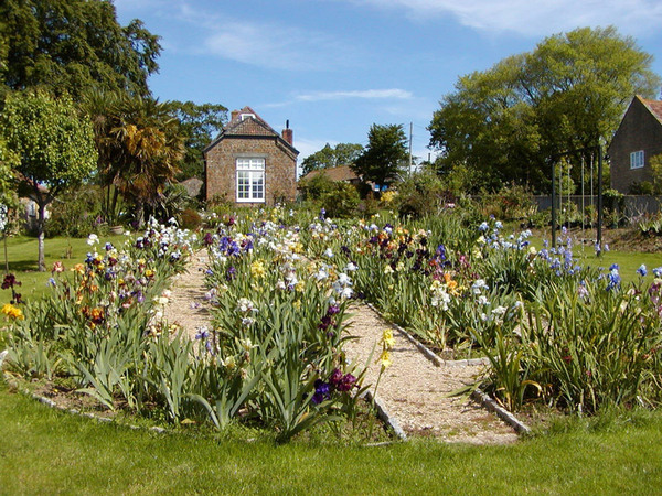 The iris garden for Irish garden designs
