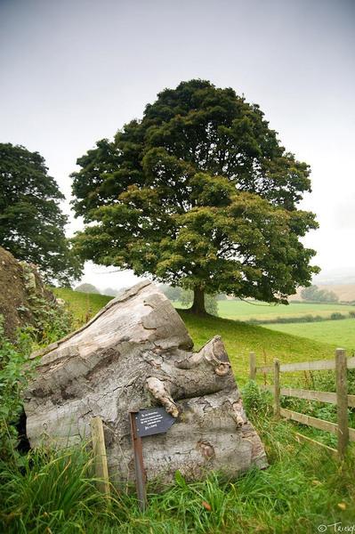 Hackfall Wood, North Yorkshire