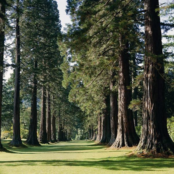 Benmore botanic garden for Garden trees scotland