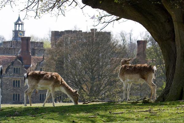 Knole Park, Kent