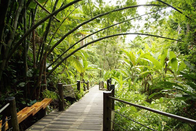 Photograph 169 hawaii tropical botanical garden