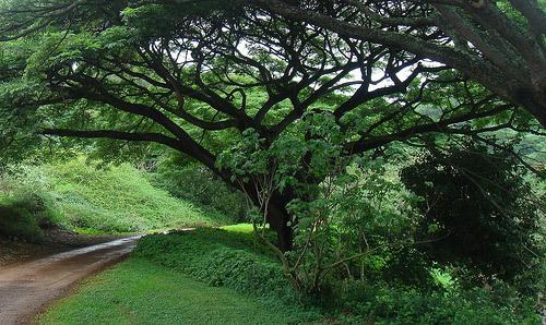 McBryde Garden, Hawaii