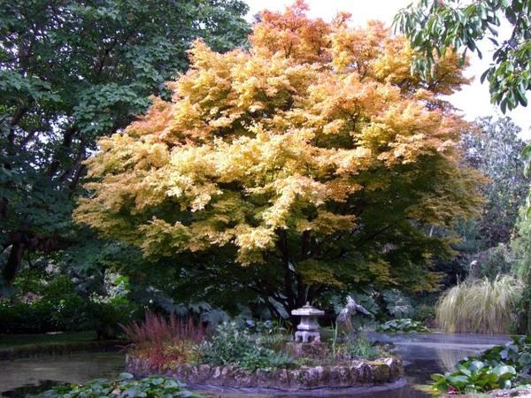 Trewidden Garden, Autumn