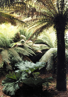 Medium trewidden fern pit original