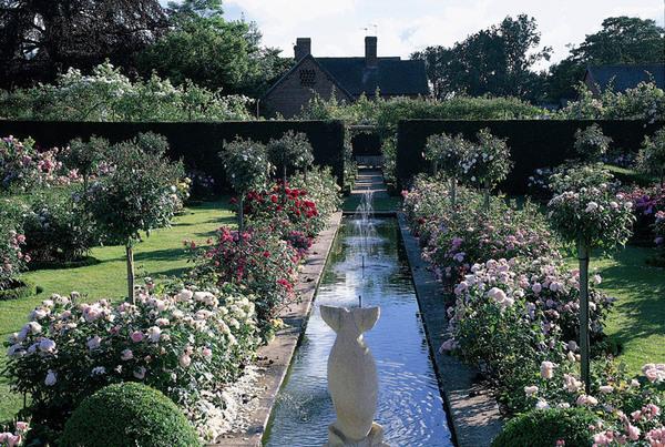 David Austin Rose Gardens, Shropshire