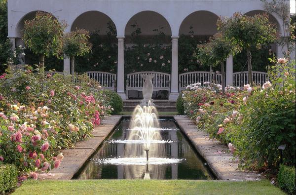 Pool, David Austin Roses
