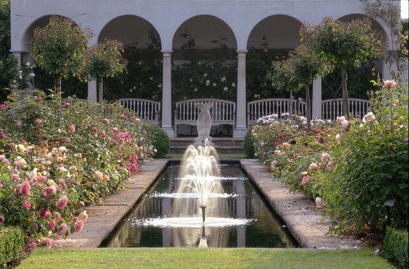 Pool David Austin Roses