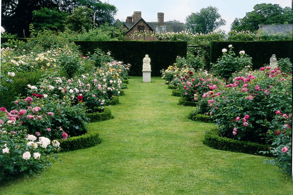 David Austin Rose Gardens, Albrighton