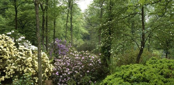 Stagshaw Garden, Cumbria