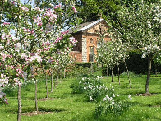 Apple Blossom, Castle Bromwich Hall Garden