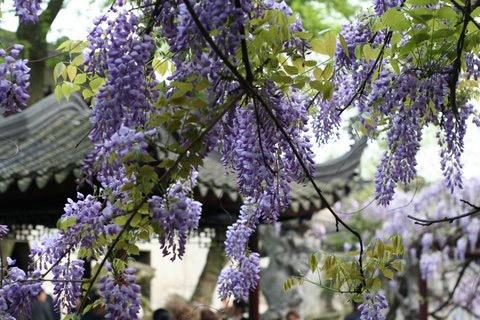 Lingering Garden, Suzhou