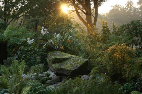 June Blake's Garden, Tinode