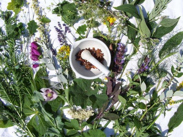 Medicinal Plants, Dilston Physic Garden