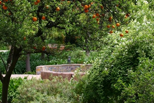 Orange Tree, Jardines de las Reales Alcazares